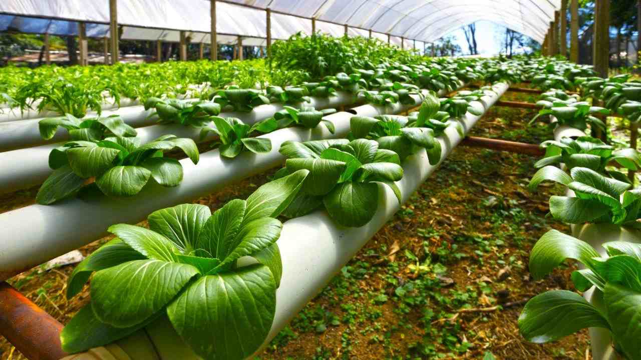 Greenhouse-for-agriculture_MIT